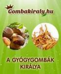 Gombakiraly.hu banner-200x240-20140305