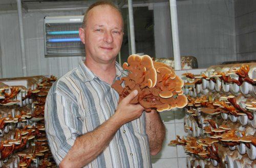 Gyöngyösi Sándor biogomba termesztő